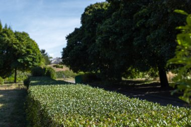Green trimmed bush between trees in park stock vector