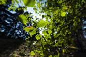 Zavřít pohled na zelené listy na větvích stromů