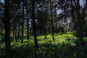 Stromy a zelená tráva se slunečním svitem v lese