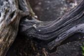 Zavřít pohled na hnědou kůru stromu