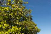 Alacsony szög kilátás őszi fák kék ég a háttérben