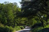 Chodník mezi stromy se zeleným listím v parku