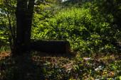 Fotografie Dřevěné klády vedle stromu na zelené trávě