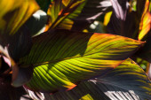 Ansicht von grünen Blättern mit roten Linien