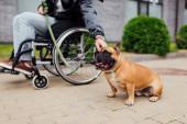 Oříznutý pohled na zdravotně postiženého muže, který přivazuje vodítko k francouzskému buldokovi na ulici