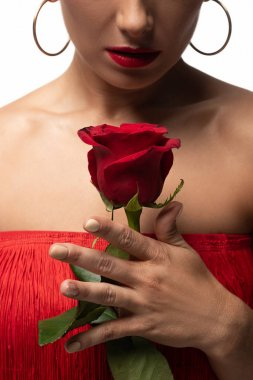 cropped view of sensual tango dancer holding red rose isolated on white