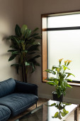 Interior on living room with blue sofa and plants