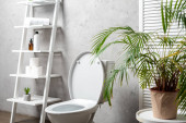 interior of modern bathroom with toilet bowl near rack with cosmetics, towels, toilet paper, palm tree