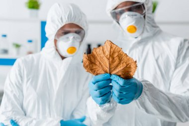 Selective focus of multicultural biologists looking at leaf in lab stock vector