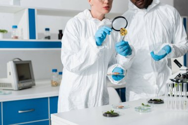 Cropped view of multicultural biologists looking at leaf with magnifying glass stock vector