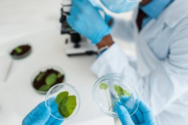 Selective focus of biologist holding leaves and african american colleague using microscope stock vector