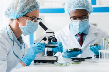 Selective focus of biologist using microscope and african american colleague looking at leaves on background stock vector