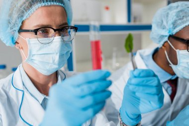 Selective focus of biologists looking at test tube and leaf, african american colleague on background stock vector