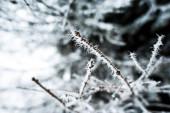 zblízka pohled na větve stromů pokryté ledem v zimě