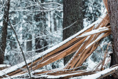 Photo wooden planks in forest covered with snow in winter