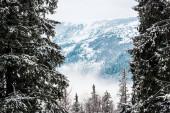 festői kilátás havas hegyek fenyőfák