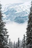 festői kilátás havas hegyek fenyőfák és fehér bolyhos felhők