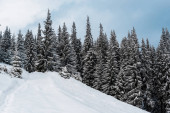 Fotografie scenic view of snowy mountain with pine trees