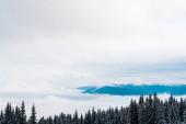 malebný pohled na zasněžené hory s borovicemi a bílé nadýchané mraky