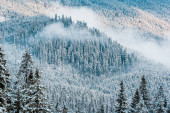 scenic view of snowy pine trees and white fluffy clouds in mountains