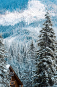 wooden house near pine trees in winter snowy mountains
