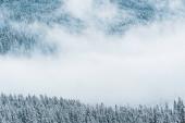 festői kilátás havas fenyőfák és fehér bolyhos felhők a hegyekben