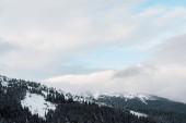 Fotografie malebný pohled na zasněžené hory s borovicemi v bílých nadýchaných mracích