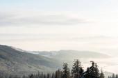 festői kilátás havas hegyek fenyőfák a napfényben