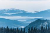 Fotografie malebný pohled na zasněžené hory s borovicemi a zamračenou oblohou