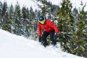 Snowboarder mit Helm fährt auf Hang in der Nähe grüner Tannen