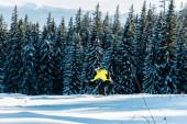 lyžař držící lyžařské hole a lyžování na sněhu u borovic