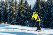 Fotografie lyžař v helmě drží lyžařské hole při lyžování na sněhu v blízkosti jedlí