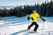 Fotografie Skifahrer mit Skibrille auf Schnee in der Nähe von Tannen