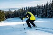 zadní pohled na lyžaře v helmě lyžování na sněhu u jedlí