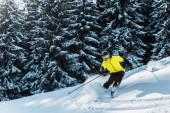 Skifahrer mit Skibrille und Helm hält Skistöcke in der Hand und fährt in der Nähe von Kiefern