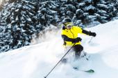 sluneční svit na lyžaře v brýlích a helmě drží lyžařské hole při lyžování v blízkosti jedlí