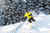 Fotografie Sportler mit Skibrille hält Skistöcke beim Skifahren auf Schnee in der Nähe von Kiefern