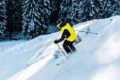 sportovec v helmě drží lyžařské hole při lyžování na sněhu u borovic