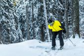 lyžař v helmě drží lyžařské hole, zatímco stojí poblíž borovic v zimě