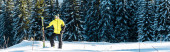 panoramatický záběr lyžaře držícího lyžařské hole a stojícího na sněhu poblíž borovic