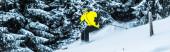 panoramatický záběr lyžaře v brýlích a helmě držícího lyžařské hole při lyžování v blízkosti jedlí