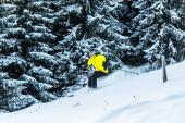 Fotografie sportovec v brýlích drží lyžařské hole při lyžování v blízkosti jedlí
