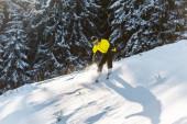 sportovec v helmě drží lyžařské hole při lyžování na sněhu v blízkosti jedlí v zimě