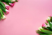 Top view of tulips on pink surface with copy space