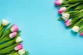 Horní pohled na tulipány na modrém pozadí s kopírovacím prostorem