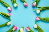 Horní pohled na kruhový rám tulipánů na modrém pozadí