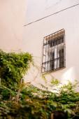 Alacsony szögű kilátás homlokzat épület ablakkal és növény