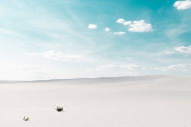 Beyaz kumlu güzel sahil bitkilerle ve mavi gökyüzü beyaz bulutlarla