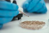 Ausgeschnittene Ansicht eines Biochemikers, der mit einer Pinzette kleine Steine aus der Petrischale holt