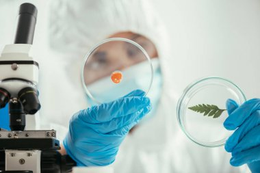 Selective focus of biochemist holding petri dishes with green leaf and biomaterial near microscope stock vector